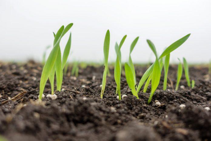 Cultivos sustentables