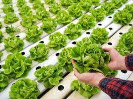 automatización agricultura