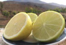Limoneros de Punitaqui