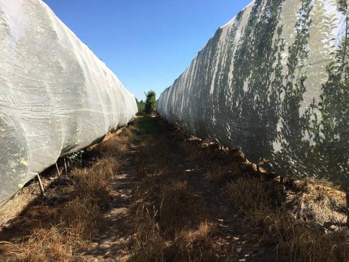 Malla agrícola