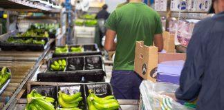 IICA Agricultura y la Seguridad Alimentaria