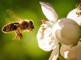 abejas PATRIMONIO NATURAL