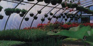 horticultura inia