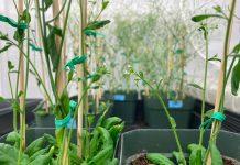 cómo incrementar el crecimiento en plantas