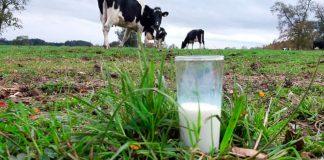 productos lácteos para fortalecer las defensas del organismo