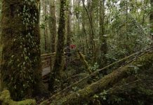 Día del Árbol: Bosque nativo