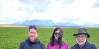 alfalfa en La Patagonia