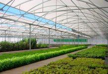 Sello de Calidad y sustentabilidad de Plantas Frutales