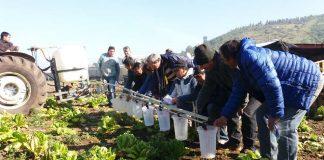 Las precipitaciones y malezas de invierno en huertos frutales