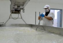 Recepción de leche anota crecimiento de 4,3% en Los Lagos