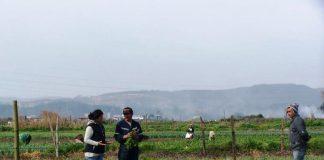 seguros del agro ante la pandemia