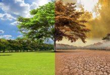 proyecto de predicción de sequía agrícola utilizando redes neuronales artificiales y sensoramiento remoto satelital