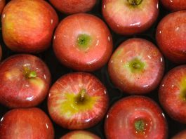 SAG inicia segundo periodo de postulación de exportadoras de productos hortofrutícolas a Federación Rusa