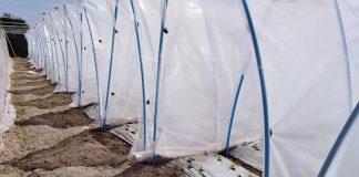 Plásticos luminiscentes: La estrategia para aumentar rendimiento de cultivos