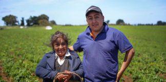 Alianzas Productivas de INDAP mantienen a más de 3.500 agricultores encadenados con los mercados