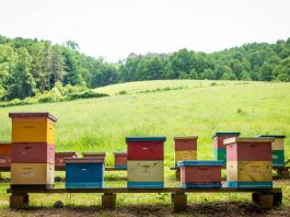 abejas primavera