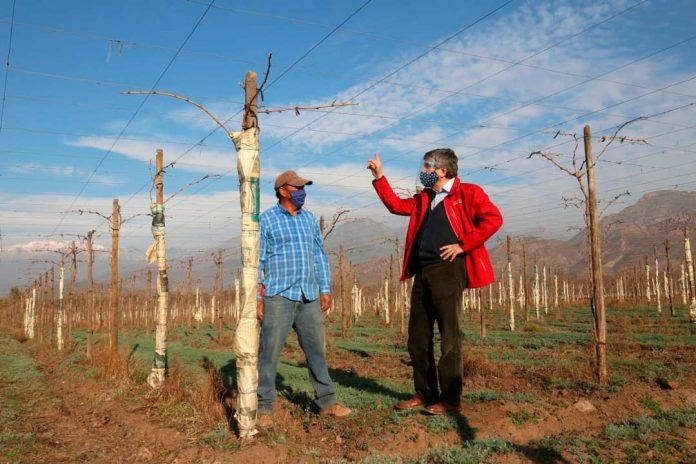 AGRICULTORES DE INDAP EN SAN FELIPE Y LOS ANDES HAN SIDO APOYADOS DURANTE PANDEMIA