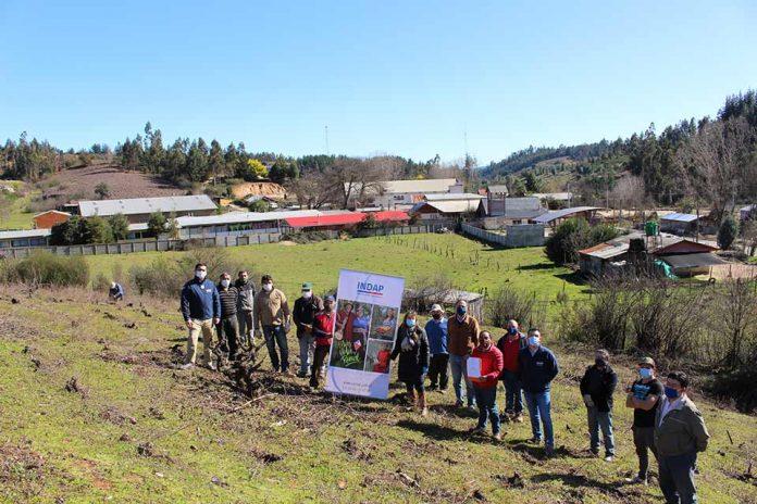 """Empresa vinífera asociativa del Valle del Itata consiguió certificación en Fairtrade o """"Comercio Justo"""" gracias al apoyo de INDAP"""