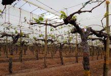 INIA avanza con éxito en investigaciones vinculadas a Objetivos de Desarrollo Sostenible