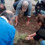 Salicornia: el alimento costero que se transforma en alternativa comercial para los pescadores de Bahía Lenca