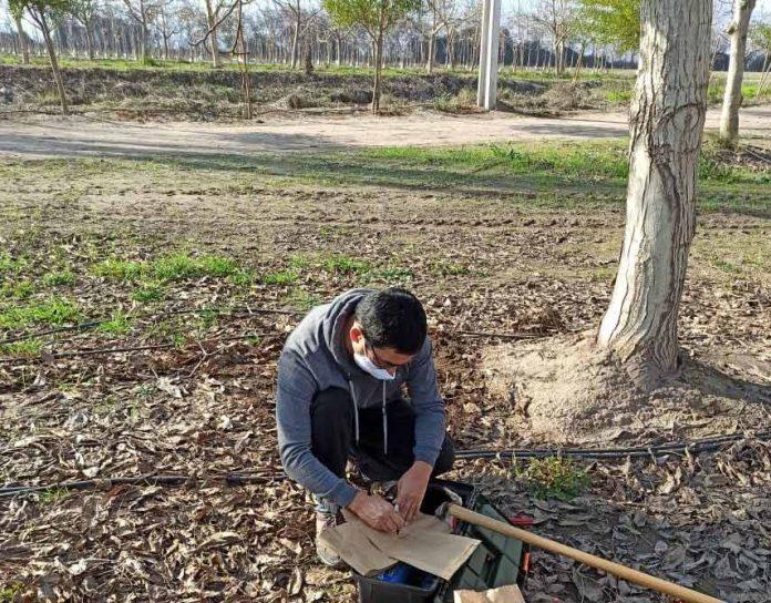 Aplicación de ácido húmico para suelos limitantes de Los Tilos