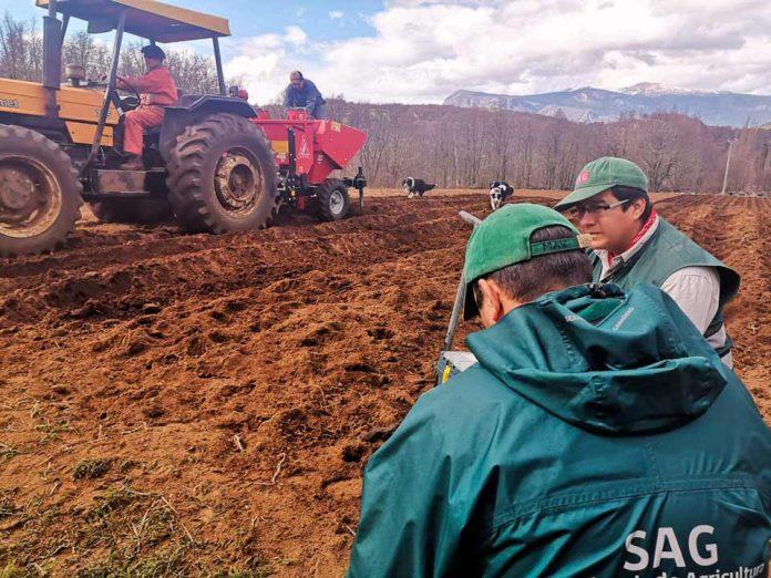 SAG informa a Productores de semilla de papa corriente deberán adelantar inscripción de sus semilleros