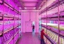 Iluminación LED aumenta producción de alimentos