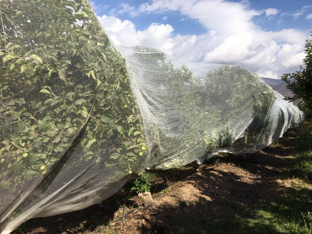Malla agrícola protección de frutales