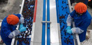 Operadores de Plantas de Embalaje Frutícola