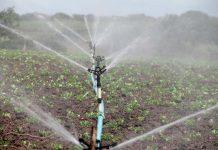 Crean Plataforma Agrícola para determinar las necesidades de riego de los cultivos en tiempo real