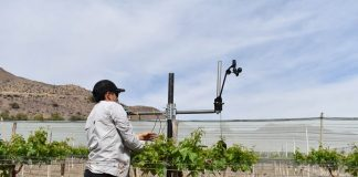 Mallas sombreadoras para uva de mesa del norte de Chile disminuyen hasta en 25% el requerimiento de agua