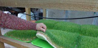 Pequeños productores de Putaendo y San Esteban producen su propio forraje verde hidropónico