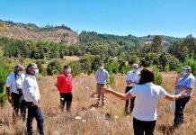 Resiliencia territorial: restauran bosques de Biobío dañados por la tormenta de fuego en 2017