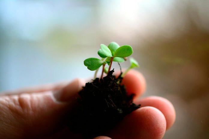 Agronomía UdeC realizará curso de verano sobre recuperación de la calidad de los suelos