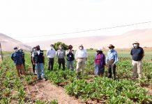 Cooperativa Pampa Concordia de Arica inaugura sala de procesos con apoyo de INDAP