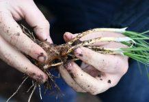FIA abre convocatoria para experiencias que complementen los procesos de innovación en el agro