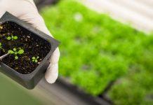 Francia apoya que los cultivos editados genéticamente no sean regulados como los transgénicos en la Unión Europea