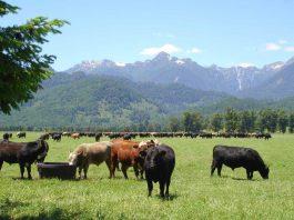 Innovación permitirá estimar el balance de carbono en predios del sur de Chile