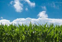 Los microorganismos son claves para el equilibrio de los ecosistemas