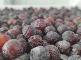 Por rentabilidad agricultores de uvas de mesa reconvierten su producción en pasas de exportación
