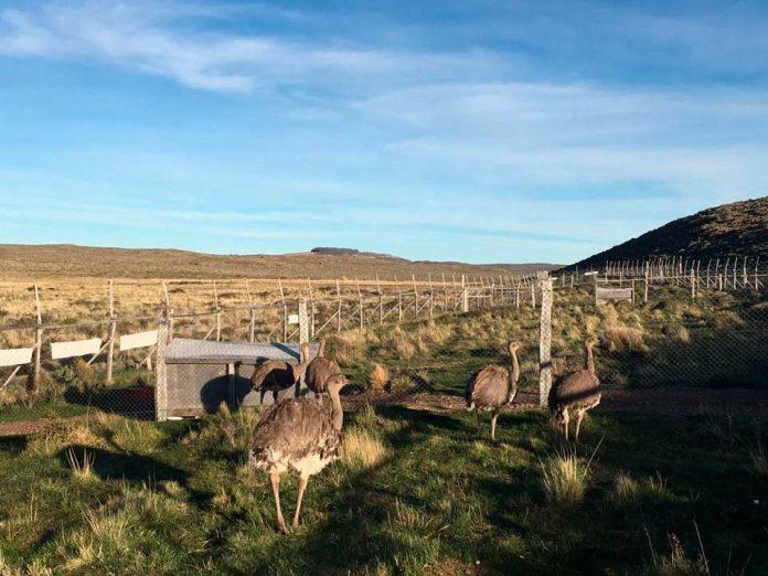 SAG Aysén recuerda realizar Declaración Semestral de Fauna Silvestre del segundo semestre de 2020