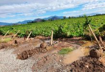 """Segundo Reporte de ASOEX: """" Se agudizan los efectos de las intensas lluvias en el sector de la fruta. Habrá menor volumen de producción y exportaciones"""""""