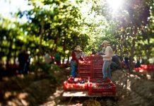 Biblioteca Digital FIA lanza siete libros para potenciar la innovación en la agricultura nacional