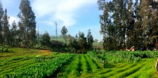 Consejo al agricultor: Cómo hacer la rotación de cultivos