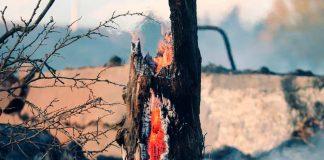 Experto de Agronomía UdeC participó en creación de manual de evaluación y restauración de suelos afectados por incendios