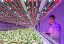 Mejorando la disponibilidad de alimentos y el rendimiento de los cultivos con la iluminación LED