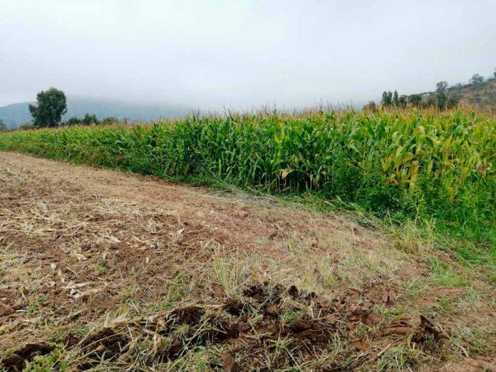 Provincia de Melipilla será beneficiada con alternativas sustentables para evitar uso del fuego en tareas agrícolas