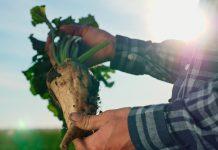 Transformación sostenible y productiva para apoyar al rubro remolachero