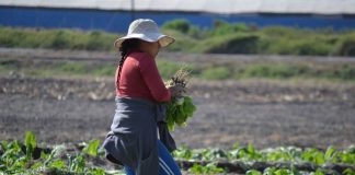 CNR compromete apoyo a mujeres rurales incorporando grupos especiales y un primer concurso nacional para agricultoras y de pueblos originarios