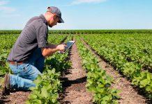 Una startup chilena está entre los ganadores de Agrostart, el fondo concursable de BASF